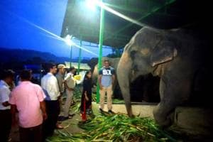 The elephants were seized on Thursday evening and shifted to Aamdanda area of Corbett Tiger Reserve where the mahouts and forest staff will take care of them
