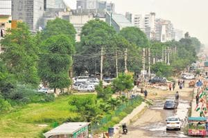 The tree will be felled under the 'strict supervision' of the state forest department.