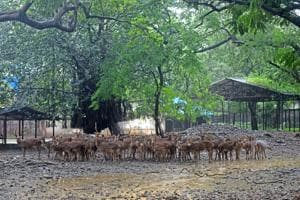 The Byculla zoo is currently spread over 48 acres.