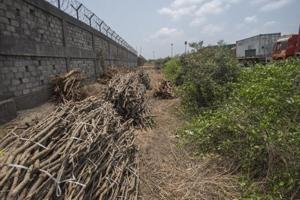 HT found large tracts of cut mangroves and even areas where hacked mangrove trees were stored by unknown persons, a clear violation of Bombay High Court orders and Environment Protection Act, 1986, near Gavaan village in Uran taluka, in Mumbai, India, on Friday, May 25, 2018.