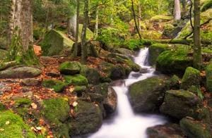 PHOTOS: 5 of the most beautiful forests around the world