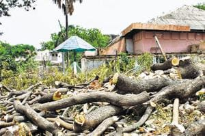 MCG felled trees at Bal Bhawan in Sector 4, Gurugram , to make way for a new auditorium.