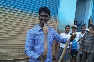A snake handler with a cobra he caught in Ernakulam after Kerala floods.