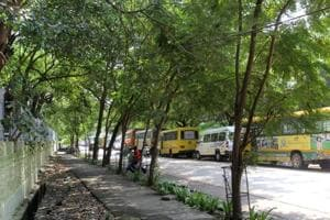 More than 3,000 heritage trees, which were to be axed for a road-widening project that was proposed in 2012 , got a new lease of life on Thursday.