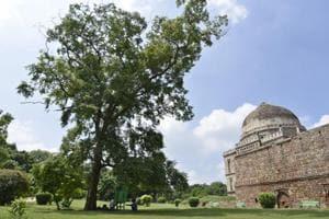 Photos  Delhi's iconic trees: Lending shade and order amid urban chaos