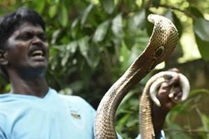 Photos: Conservationist Vava Suresh tackles flood-hit Kerala's snake menace