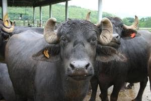 The country is one of the largest exporters of buffalo meat and rice globally.