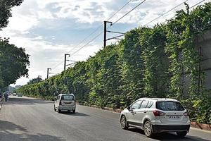Greenery along busy roads can cut air pollution caused by vehicular emissions.