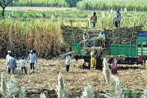Sugar mills, which are supposed to pay farmers, blame the non-payment on unsold sugar stocks and fall in sugar prices