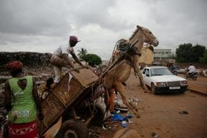 Photos: In Mali's capital, donkeys lead the fight against waste