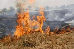Millions of tonnes of agricultural stubble is burnt by farmers in north India every October, before the onset of winter.