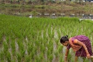 It will still be difficult to suddenly globalise India's agriculture, analysts say.