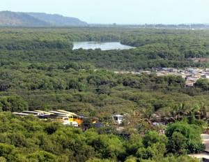 This order strengthens mangrove protection in Maharashtra, said experts.
