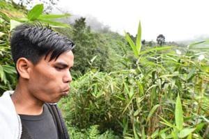 Photos: In Meghalaya's Kongthong village, melodies make names