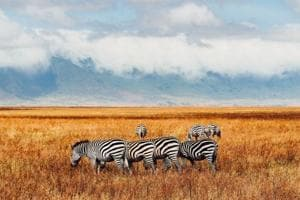Eco-friendly safaris and carbon-neutral lodging in Africa draw increasing numbers of tourists from Europe and North America.