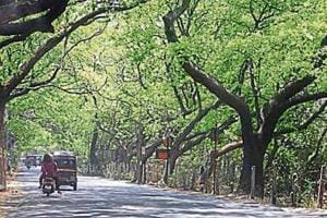 Wildlife biologists have documented a large biodiversity at Aarey.