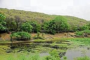 Officials from the forest, revenue and disaster management and the town and country planning (TCP)departments will discuss the delineation of the Natural Conservation Zone (NCZ) status for parts of the Aravallis.