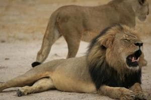 All the dead lions were found in Gir (east) division, mainly from Dalkhaniya range in the last few days, an official said.