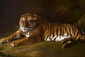 Photo of George Stubbs' painting from life of the Bengal tiger in the late 18th century.