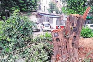 The forest department Gurugram has imposed a heavy penalty of Rs 1.16 lakh on a senior official of the horticulture wing of Haryana Shahari Vikas Pradhikaran (HSVP) for cutting trees without prior permission of the competent authority two weeks ago.