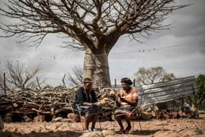 Photos: Baobab's superfood hype creates business for South African villages