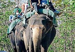 Tourists enjoying elephant safari at Jim Corbett National Park .