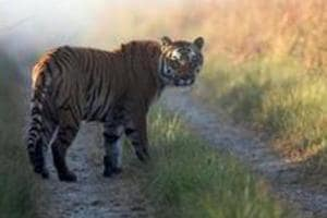 It was reported that in the last two-and-a-half years, 40 tigers and 272 leopards have died in Uttarakhand.