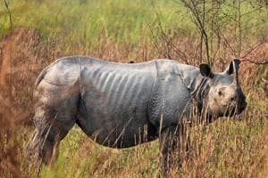 The WII now has DNA samples of around 100 rhinos from Pobitora Wildlife Sanctuary in Assam, 40 from Dudhwa National Park in UP, around 35-40 from Manas National Park and about 70-80 rhinos from Kaziranga National Park, both in Assam.