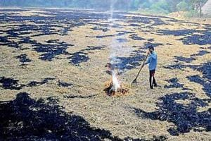 In this harvest season, 336 cases of farm waste burning have been reported. Amritsar tops the list with 122 cases.