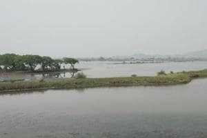 In 2014, the Bombay high court had banned reclamation and construction on wetlands after environment groups filed a petition to protect them.