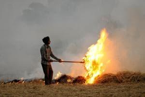 Afarmer burns  stubble in his paddy field near Patiala on Thursday, October 11, 2018.