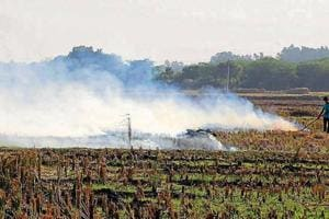 A farmer burning stubble in a field at Baroli village in Dera Bassi on Tuesday. Farmers have been fined ₹42,500 for flouting the ban in the past fortnight.
