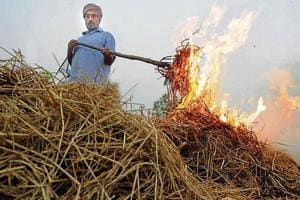 A member of a farmer union burning paddy stubble at a Patiala village on Tuesday.
