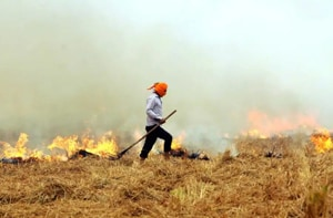 So far in 2018, the state has recorded 1,212 cases of paddy stubble burning as against 3,141 and 6,733 in the corresponding periods in 2017 and 2016 respectively.