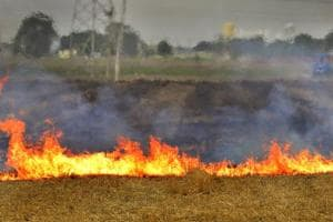 Wheat stubble being burnt in a field on the outskirts of Ludhiana. Stubble burning in Punjab and Haryana has been blamed for increasing air pollution in the two states and the national capital region.
