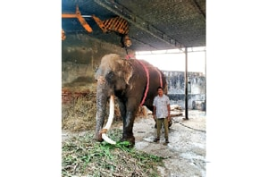 70-yr-old elephant at Chhatbir Zoo in Punjab critical, put on life support