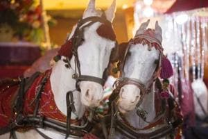 Many bridegrooms in Delhi NCR have decided to not opt for the customary ride on the mare in light of PETA's campaign