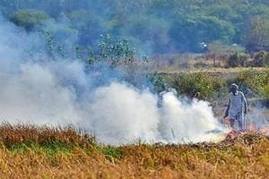 Despite ban, a farmer setting paddy stubble on fire in his fields at Mote Majra village in Kharar tehsil of Mohali in Monday.