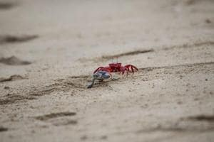 Photos: Survival is a flippin' hard fight for Myanmar's sea turtles