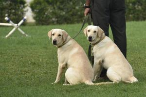 Photos: Between meals and massages, the cushy lives of retired army dogs