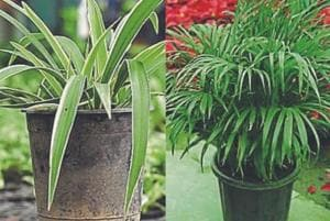 There's a wide variety of plants which not only produce oxygen and absorb carbon dioxide but also cleanse the air of pollutants such as benzene, formaldehyde, etc.