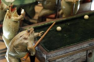 Photos | Pubs and parties: A Swiss frog's life in 19th century vignettes