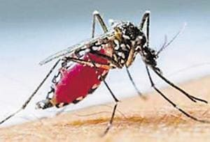 Dengue is caused by aedes mosquitos, which breed in stagnant water. Experts attribute the rise in dengue cases to change in weather, rainfall and water-logging.