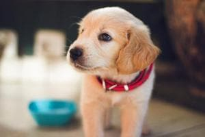 Cause 4 the Paws is in its sixth season and will have 25 dogs from the Sanjay Gandhi Animal Care Centre up for adoption.