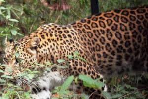 Since 2007, at least 600 people have lost their and 3,100 received injuries in attacks by wild animals in the state.