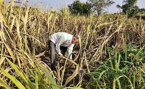 The 2018 data released by GSDA states that 13,984 villages in 252 tehsils in Maharashtra have showed groundwater depletion of more than one metre in September this year.