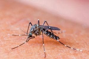 Chikungunya causes fever, headache, and prolonged joint pains that can last for months after the infection has cleared.