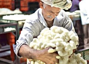 A farmer moves his  silk cocoons during bidding at the government cocoon market in Ramnagara near Bengaluru.