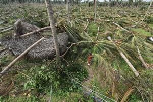Coconut trees and several other plants uprooted due to the Cyclone Gaja in Pudukottai, Tamil Nadu (PTI File Photo)