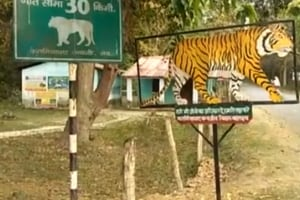 Two leopard cubs found dead in Katarniaghat Wildlife Sanctuary in UP